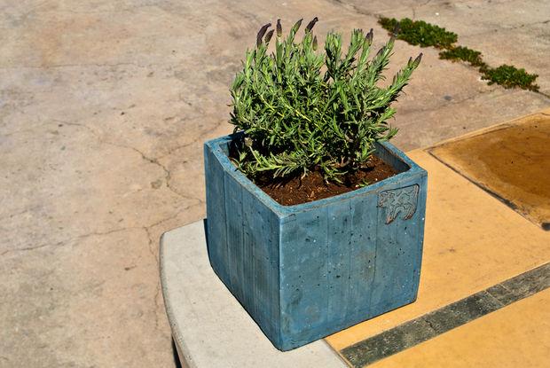 готовый бетонный горшок с цветком