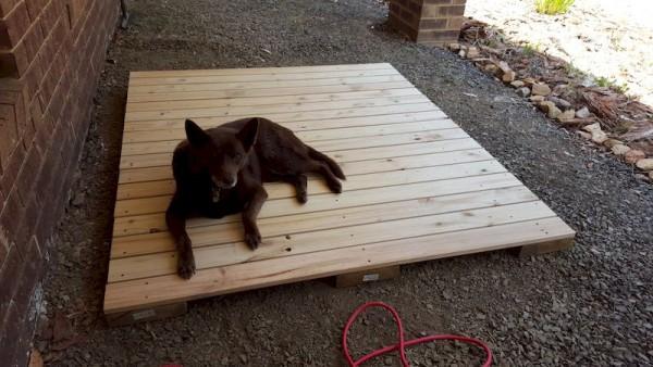 Собака лежит на деревянном настиле