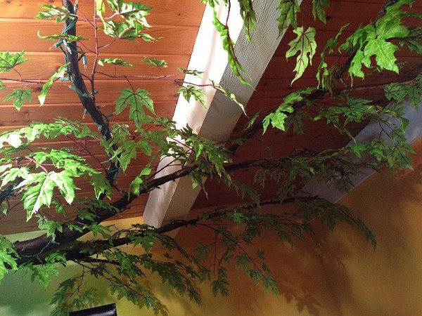 Листья на верхнем ярусе волшебного дерева