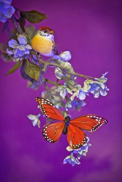 Птица и бабочка на ветке