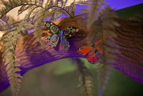 Бабочки на ветке дерева