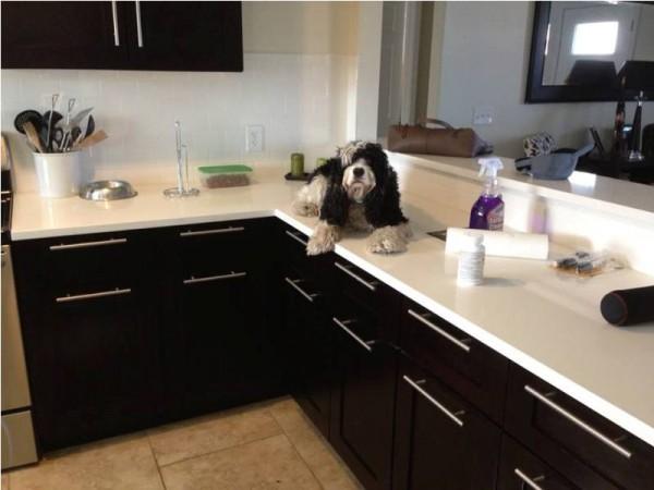 Собака лежит в кухне на столешнице