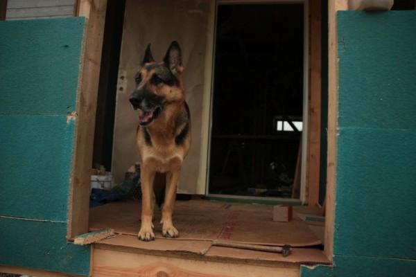 Собака на стоит на крыльце