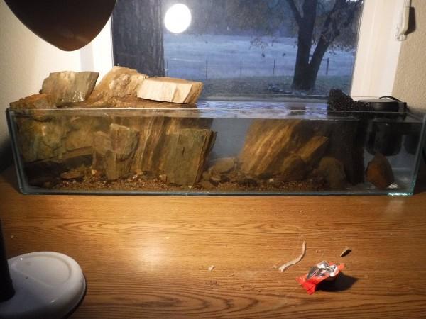 Аквариум с декорациями наполненный водой