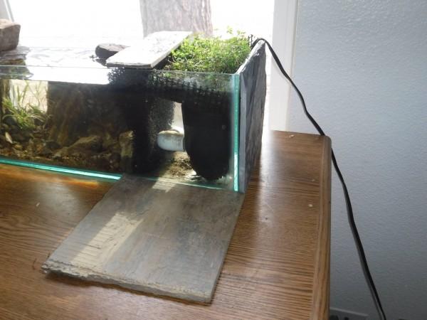 Растения в аквариуме, вид сбоку