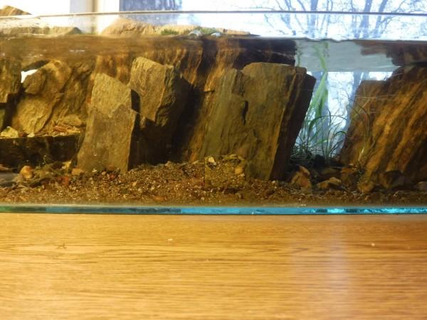 Рыба в аквариуме с потоком воды