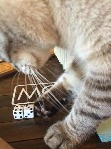 Кот играет кубиками