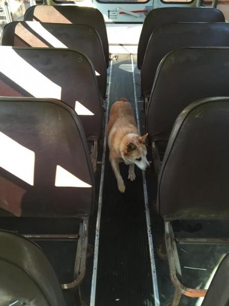 Собака в салоне автобуса