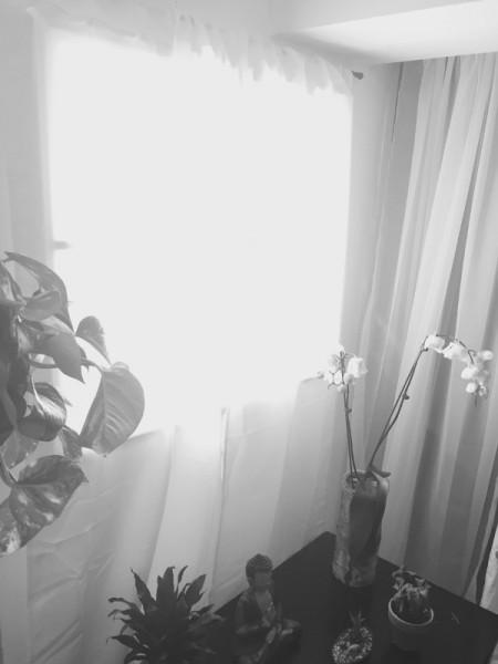 Фальш окно со шторами и архидея