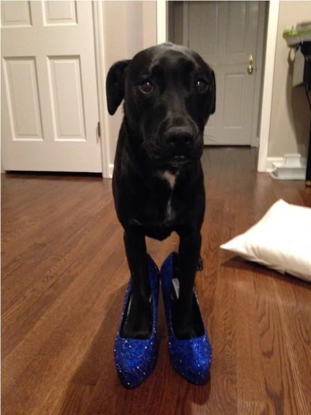 Собака в синих туфлях со стразами