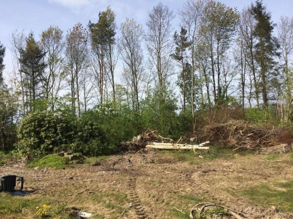 Сад после расчистки