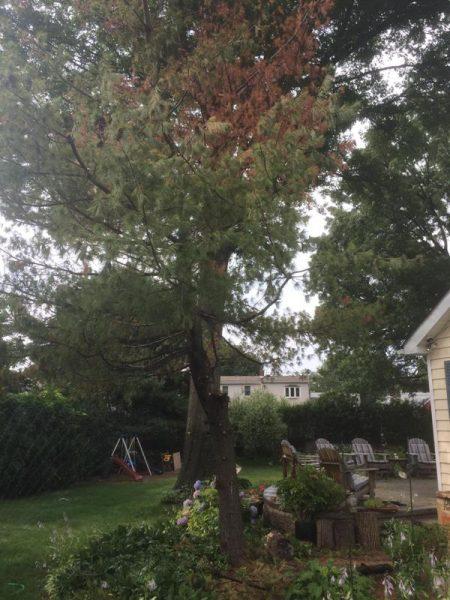 Во дворе дома деревья и деревянные стулья