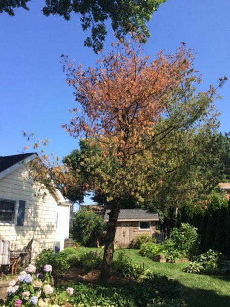 Возле дома сухое дерево