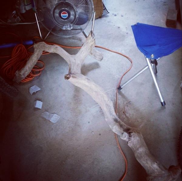 Шлифованная ветка дерева без коры