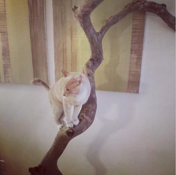 Кот на ветке дерева
