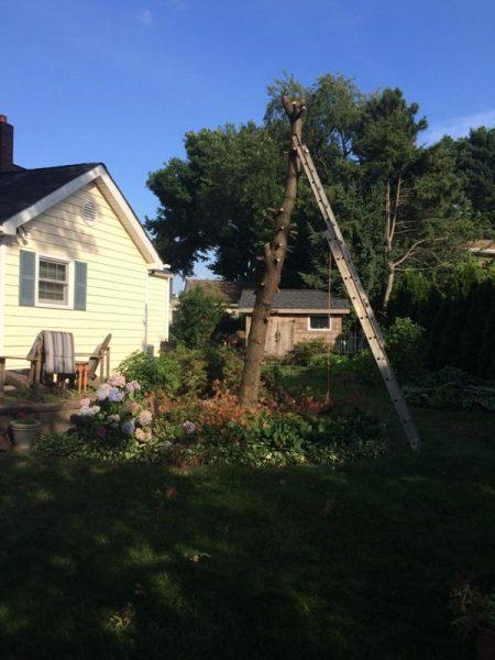 Ствол дерева без веток и металлическая лестница