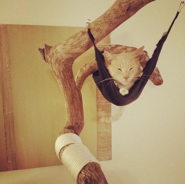 Кот лежит в гамаке на ветке в комнате