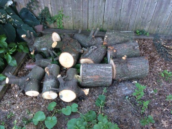 Распиленное дерево