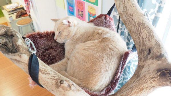 Кот в гамаке крупным планом, вид сбоку