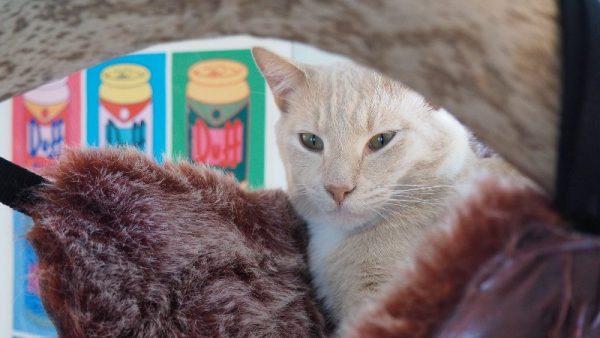 Кот в гамаке крупным планом