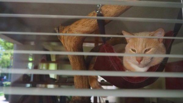 Кот в гамаке вид из окна