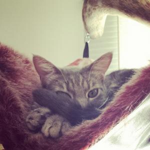 Серый кот в гамаке на дереве