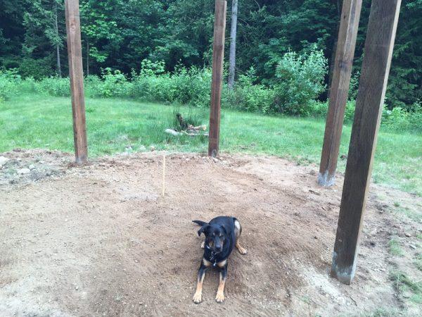 Собака лежит на земле возле деревянных столбов