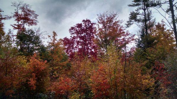 На деревьях жёлтые и красные листья