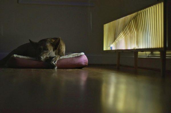 Собака лежит на подушке и подставка под телевизор с огнями