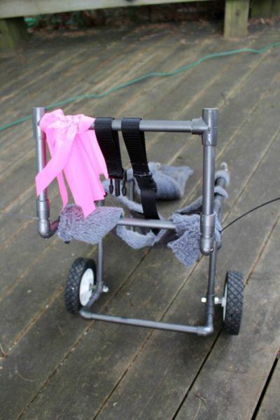 Инвалидная коляска для собаки, вид сзади